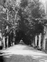 iCicero: Terracina - Multimedia -  Foto e stampe d'epoca