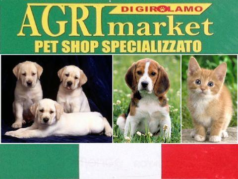 iCicero: Terracina - Agrimarket